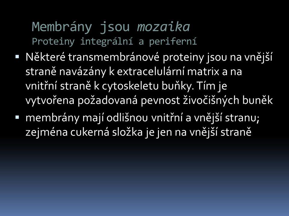 Membrány jsou mozaika Proteiny integrální a periferní  Některé transmembránové proteiny jsou na vnější straně navázány k extracelulární matrix a na v