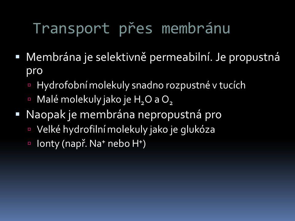 Transport přes membránu  Membrána je selektivně permeabilní. Je propustná pro  Hydrofobní molekuly snadno rozpustné v tucích  Malé molekuly jako je