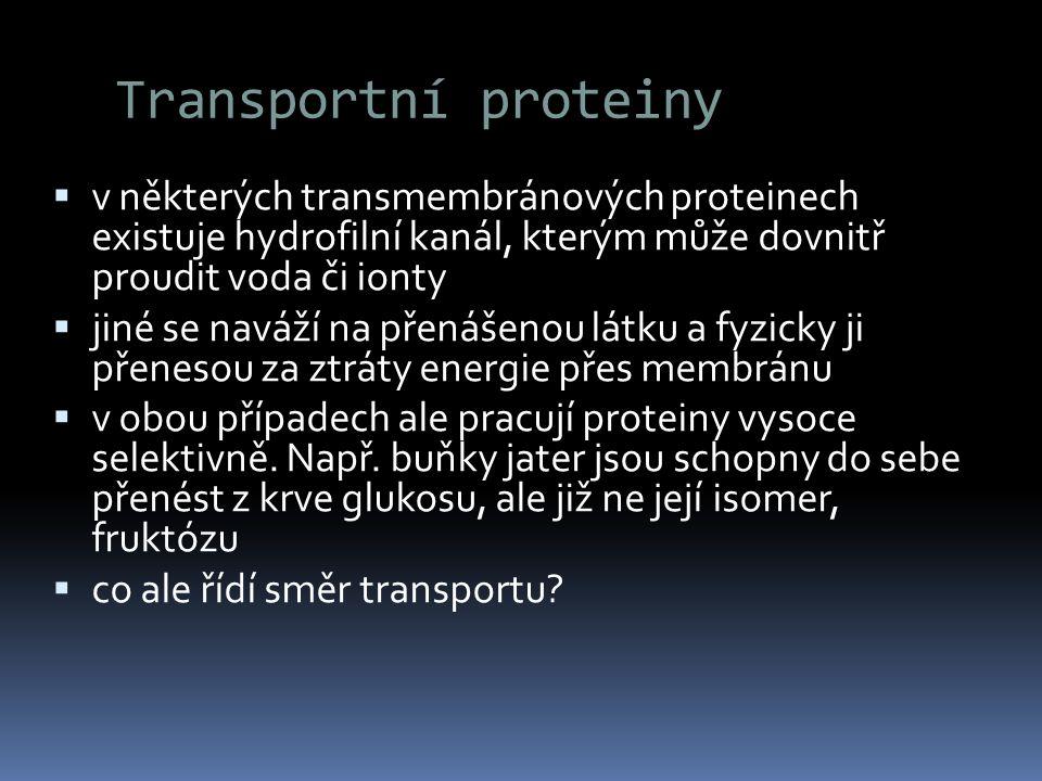 Transportní proteiny  v některých transmembránových proteinech existuje hydrofilní kanál, kterým může dovnitř proudit voda či ionty  jiné se naváží