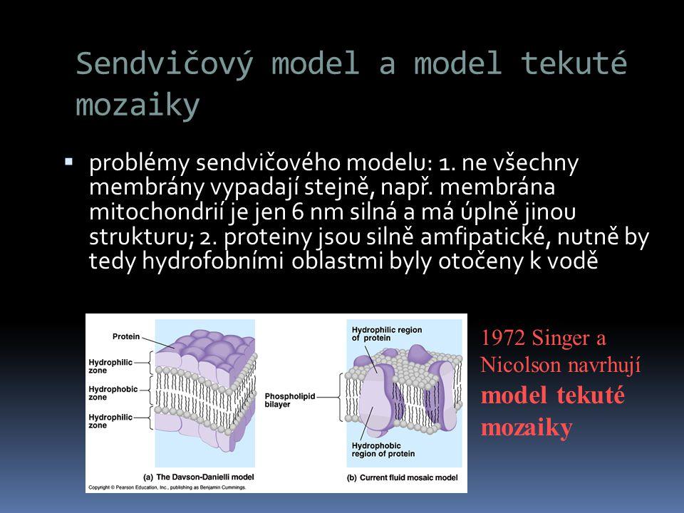 Sendvičový model a model tekuté mozaiky  problémy sendvičového modelu: 1. ne všechny membrány vypadají stejně, např. membrána mitochondrií je jen 6 n