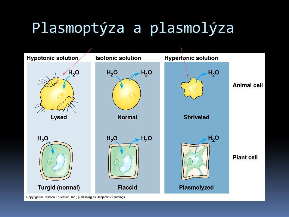 Plasmoptýza a plasmolýza