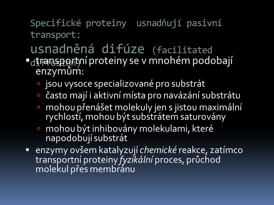 Specifické proteiny usnadňují pasivní transport: usnadněná difúze (facilitated diffusion)  transportní proteiny se v mnohém podobají enzymům:  jsou
