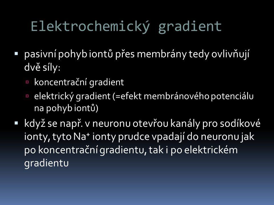 Elektrochemický gradient  pasivní pohyb iontů přes membrány tedy ovlivňují dvě síly:  koncentrační gradient  elektrický gradient (=efekt membránové