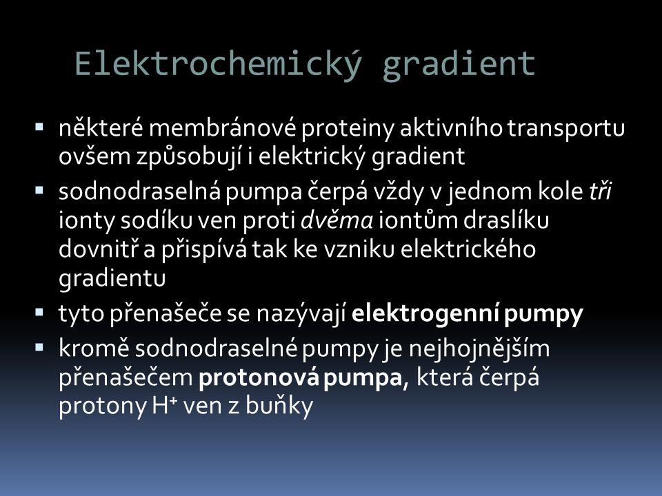 Elektrochemický gradient  některé membránové proteiny aktivního transportu ovšem způsobují i elektrický gradient  sodnodraselná pumpa čerpá vždy v j