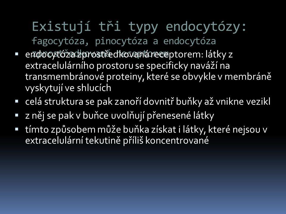 Existují tři typy endocytózy: fagocytóza, pinocytóza a endocytóza zprostředkovaná receptorem  endocytóza zprostředkovaná receptorem: látky z extracel