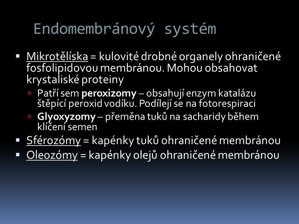 Endomembránový systém  Mikrotělíska = kulovité drobné organely ohraničené fosfolipidovou membránou. Mohou obsahovat krystaliské proteiny  Patří sem