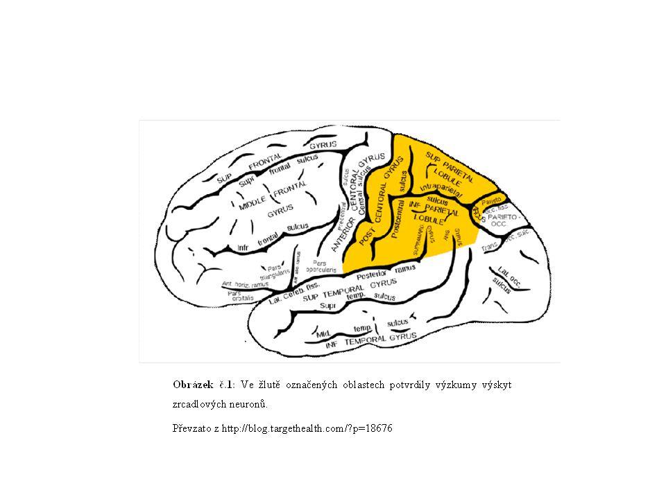 zrcadlové neurony také když o pohybu slyšíme nebo mluvíme; zrcadlení aktivity jiných lidí i když vnímáme pocity druhých - nezprostředkované porozumění pocitům druhé osoby (ZN v insule) zrcadlové neurony také doplňují pozorované části scény tak, aby vznikla očekávaná celková sekvence- základ intuice
