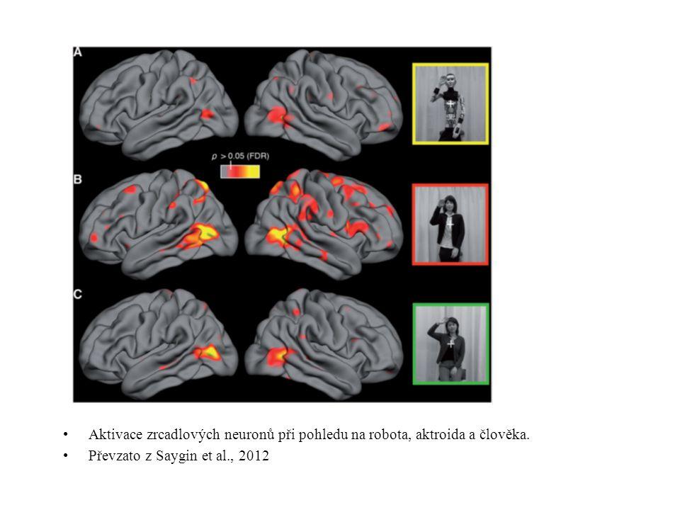 Aktivace zrcadlových neuronů při pohledu na robota, aktroida a člověka. Převzato z Saygin et al., 2012