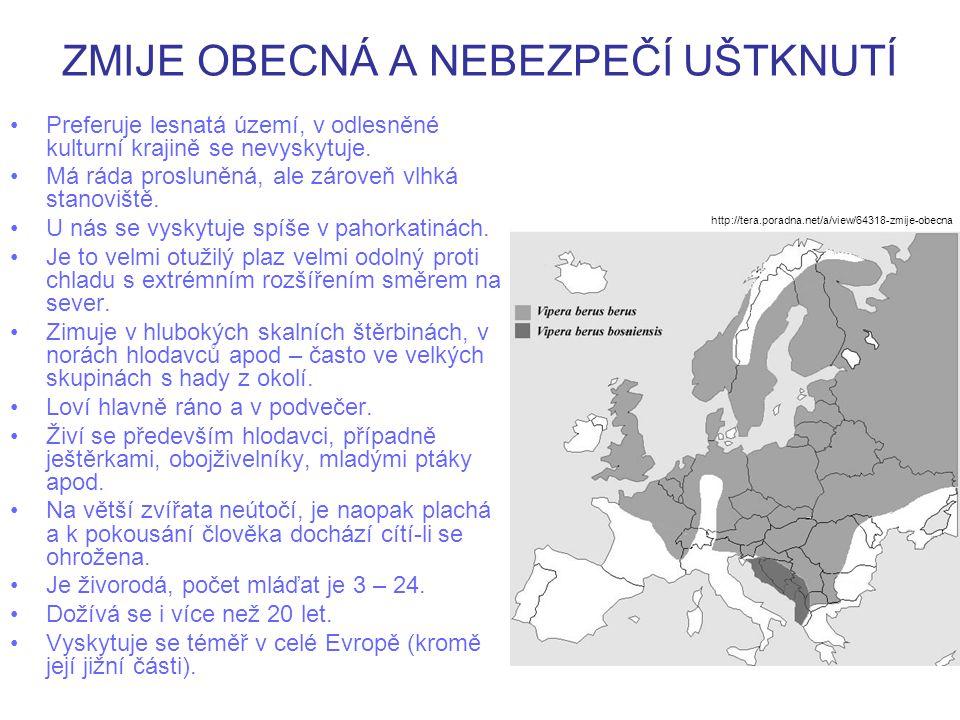 ZMIJE OBECNÁ A NEBEZPEČÍ UŠTKNUTÍ Je jediným jedovatým hadem, který žije v ČR.