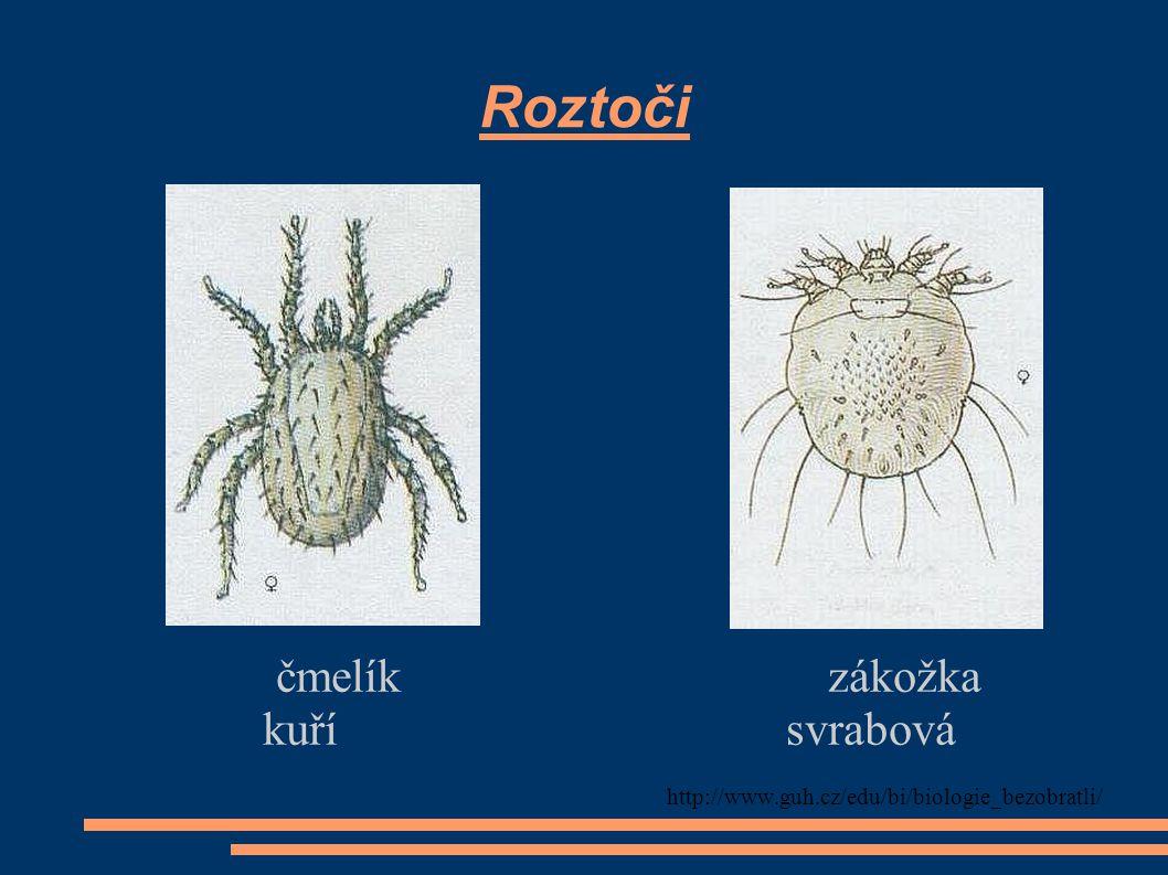 Roztoči čmelík zákožka kuří svrabová http://www.guh.cz/edu/bi/biologie_bezobratli/