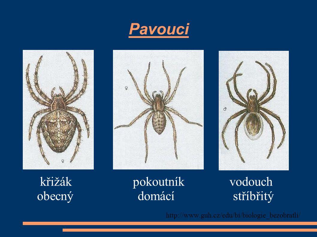 Pavouci křižák pokoutník vodouch obecný domácí stříbřitý http://www.guh.cz/edu/bi/biologie_bezobratli/