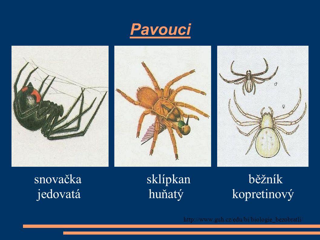 Pavouci snovačka sklípkan běžník jedovatá huňatý kopretinový http://www.guh.cz/edu/bi/biologie_bezobratli/