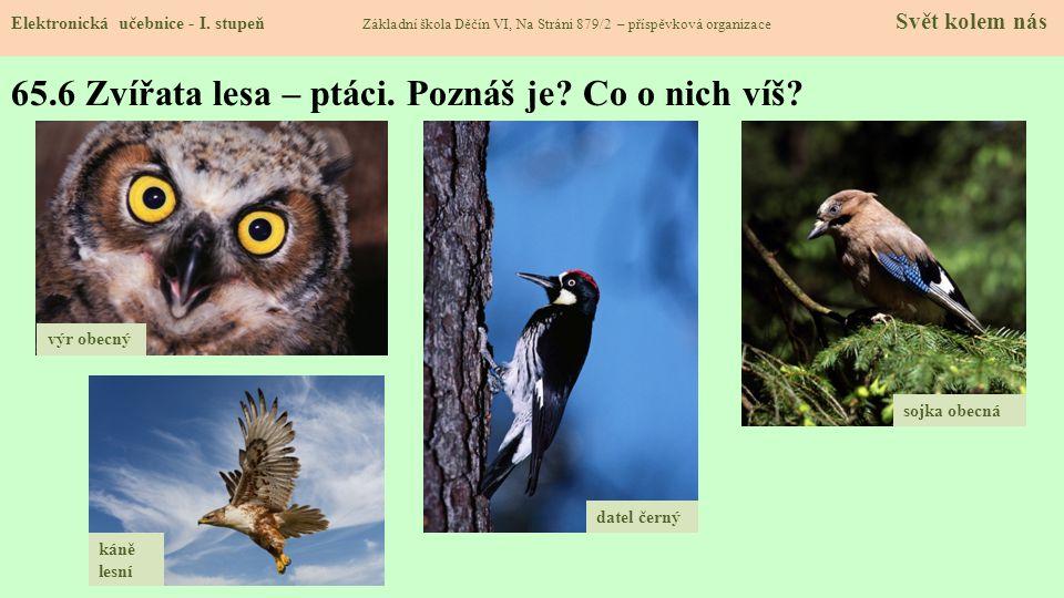 65.7 Kukačka obecná Elektronická učebnice - I.