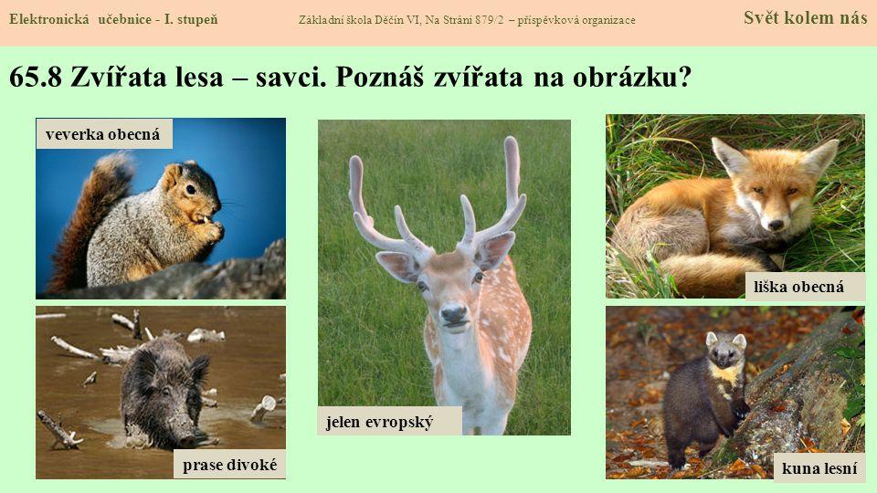 65.9 Veverka obecná Elektronická učebnice - I.