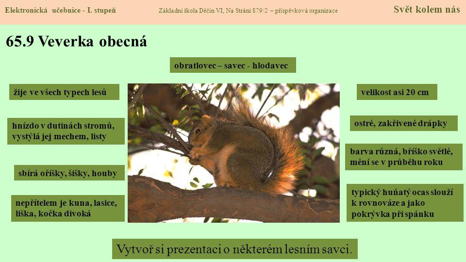 65.10 Zvířata lesa – plazi a hmyz.Poznáš je. Jmenuj další.
