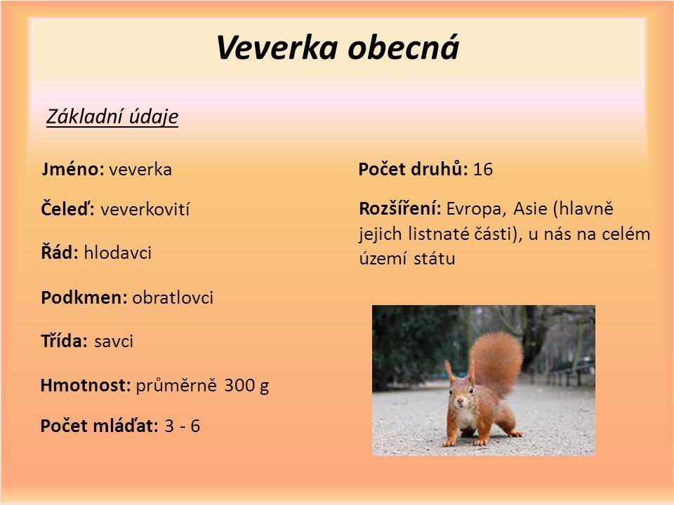 Veverka obecná Základní údaje Jméno: veverka Čeleď: veverkovití Řád: hlodavci Třída: savci Hmotnost: průměrně 300 g Počet mláďat: 3 - 6 Počet druhů: 1