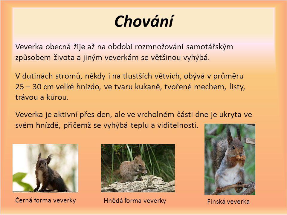 Chování Veverka obecná žije až na období rozmnožování samotářským způsobem života a jiným veverkám se většinou vyhýbá. V dutinách stromů, někdy i na t