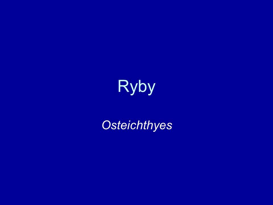 Ryby Osteichthyes