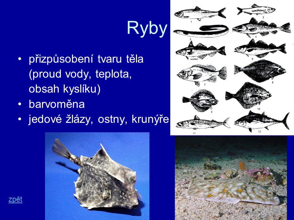 Ryby přizpůsobení tvaru těla (proud vody, teplota, obsah kyslíku) barvoměna jedové žlázy, ostny, krunýře zpět