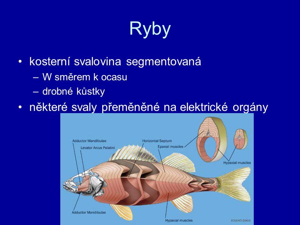 Ryby nervová soustava: –nejvyvinutější je střední mozek a mozeček –postranní čára –další smysly soustředěny kolem úst