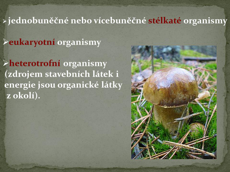  jednobuněčné nebo vícebuněčné stélkaté organismy  eukaryotní organismy  heterotrofní organismy (zdrojem stavebních látek i energie jsou organické