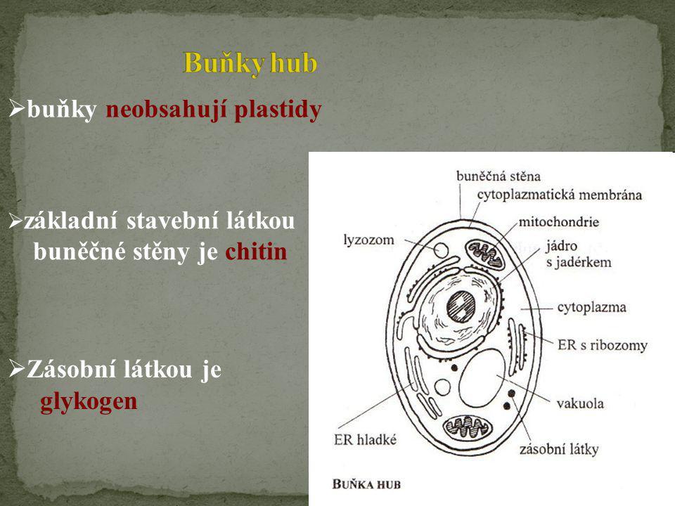  Zásobní látkou je glykogen  buňky neobsahují plastidy  základní stavební látkou buněčné stěny je chitin