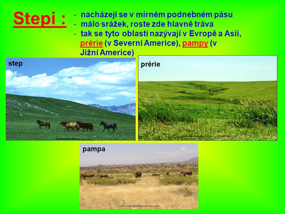 Stepi : - nacházejí se v mírném podnebném pásu - málo srážek, roste zde hlavně tráva - tak se tyto oblasti nazývají v Evropě a Asii, prérie (v Severní