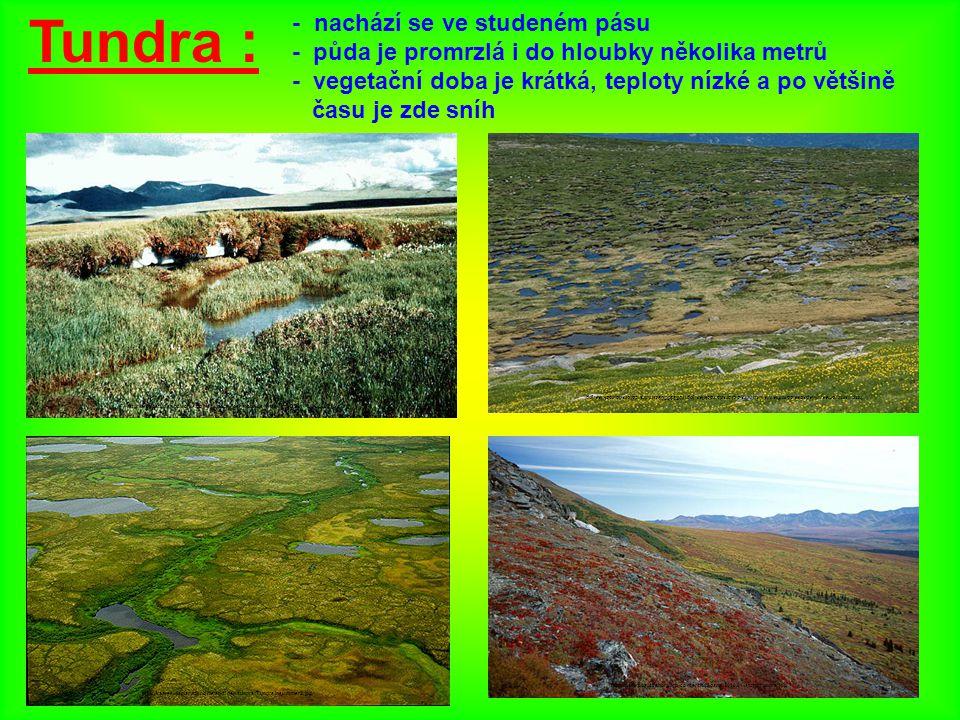 Tundra : - nachází se ve studeném pásu - půda je promrzlá i do hloubky několika metrů - vegetační doba je krátká, teploty nízké a po většině času je z