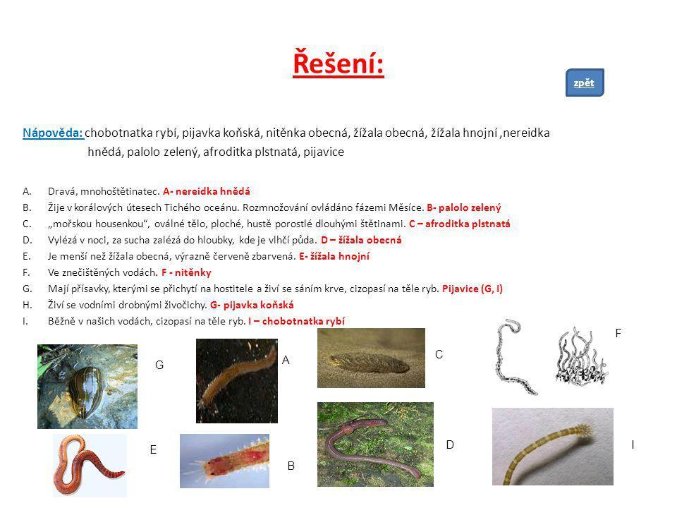 Řešení: Nápověda: chobotnatka rybí, pijavka koňská, nitěnka obecná, žížala obecná, žížala hnojní,nereidka hnědá, palolo zelený, afroditka plstnatá, pi