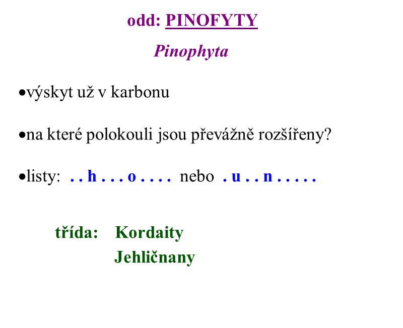 odd: PINOFYTY Pinophyta  výskyt už v karbonu  na které polokouli jsou převážně rozšířeny?  listy:.. h... o.... nebo. u.. n..... třída:Kordaity Jehl