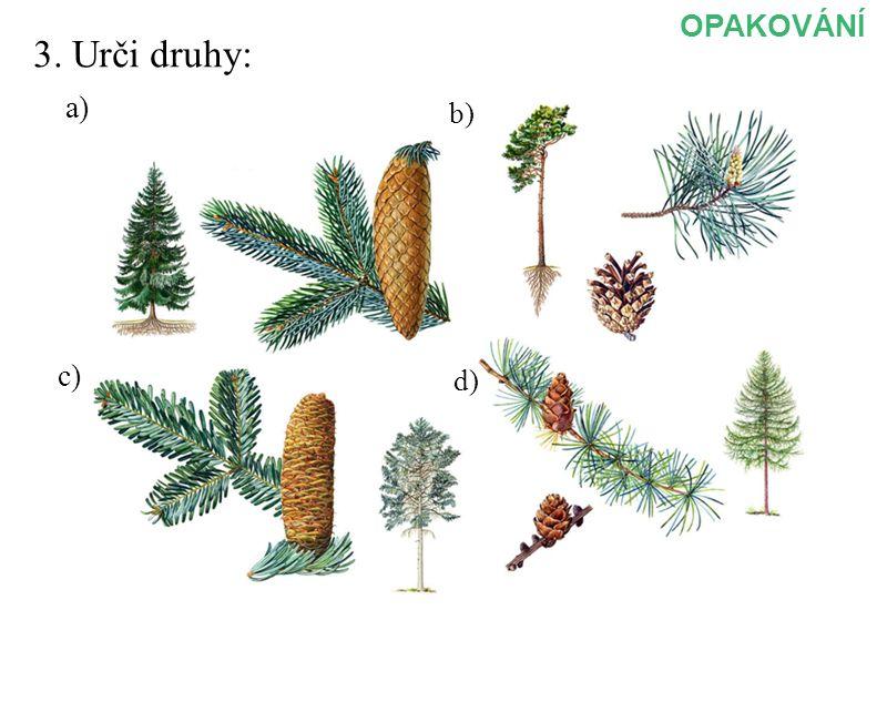 OPAKOVÁNÍ 3. Urči druhy: a) b) c) d)