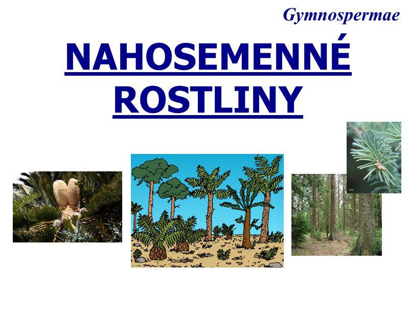 NAHOSEMENNÉ ROSTLINY Gymnospermae