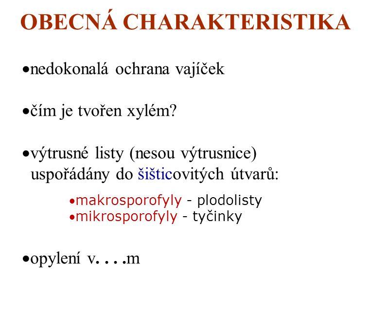 odd: KAPRAĎOSEMENNÉ Lyginodendrophyta  vyskytují se v dnešní době?  vzrůst:  listy: