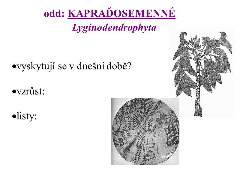odd: CYKASY Cycadophyta