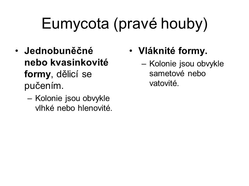 Eumycota (pravé houby) Jednobuněčné nebo kvasinkovité formy, dělicí se pučením. –Kolonie jsou obvykle vlhké nebo hlenovité. Vláknité formy. –Kolonie j
