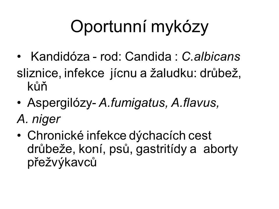 Oportunní mykózy Kandidóza - rod: Candida : C.albicans sliznice, infekce jícnu a žaludku: drůbež, kůň Aspergilózy- A.fumigatus, A.flavus, A. niger Chr