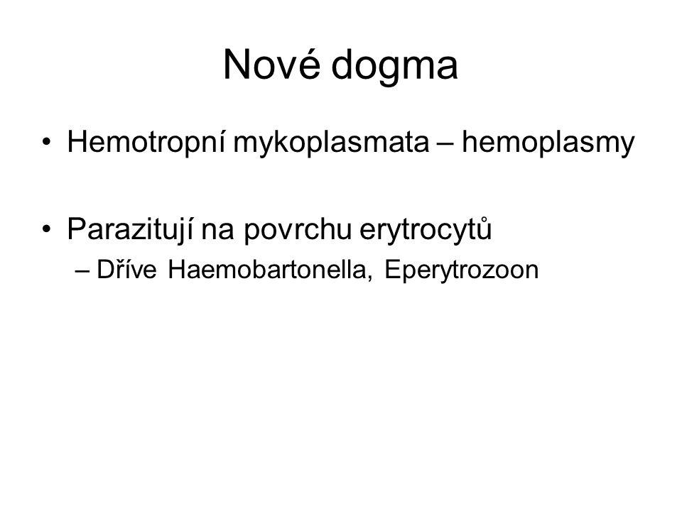 Nové dogma Hemotropní mykoplasmata – hemoplasmy Parazitují na povrchu erytrocytů –Dříve Haemobartonella, Eperytrozoon