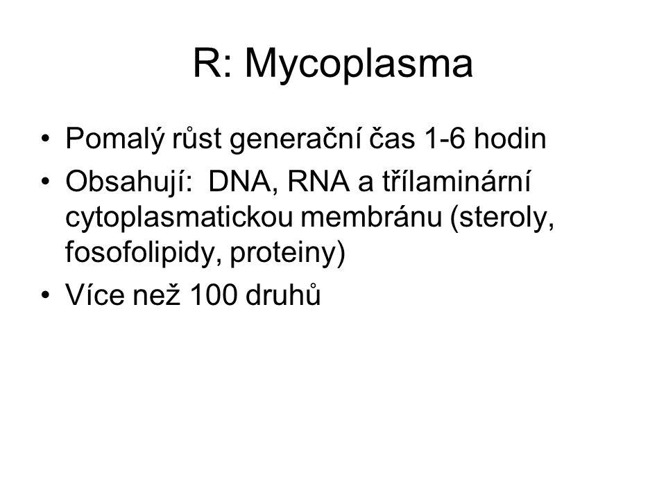 R: Mycoplasma Pomalý růst generační čas 1-6 hodin Obsahují: DNA, RNA a třílaminární cytoplasmatickou membránu (steroly, fosofolipidy, proteiny) Více n