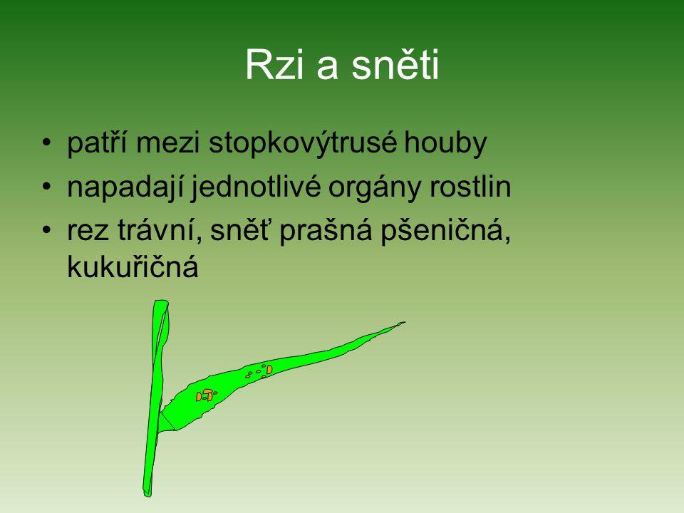 Rzi a sněti patří mezi stopkovýtrusé houby napadají jednotlivé orgány rostlin rez trávní, sněť prašná pšeničná, kukuřičná