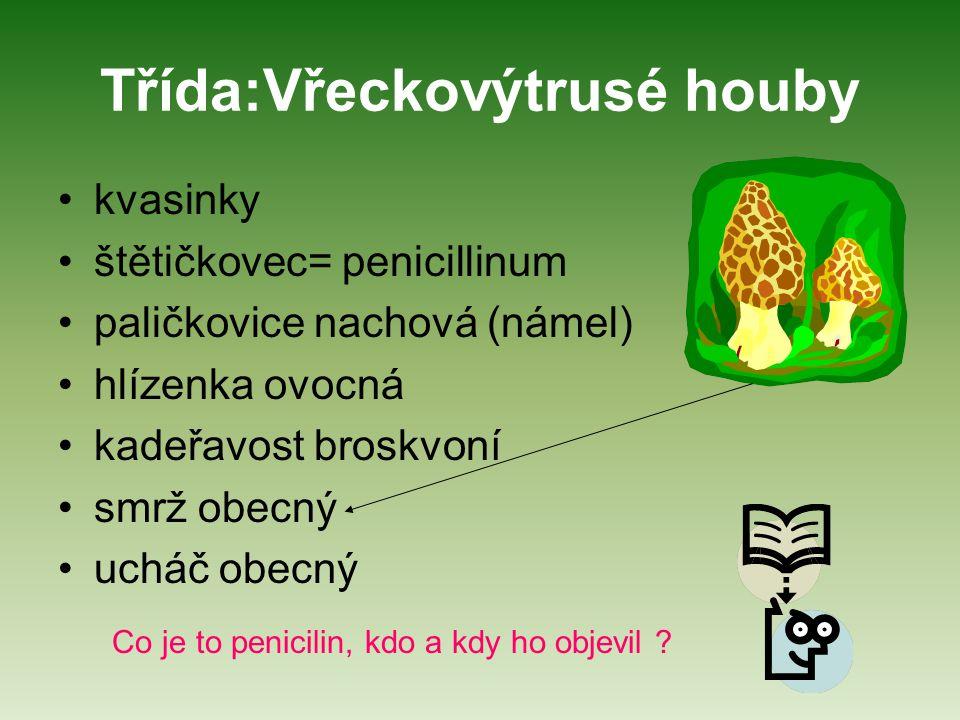 Třída:Vřeckovýtrusé houby kvasinky štětičkovec= penicillinum paličkovice nachová (námel) hlízenka ovocná kadeřavost broskvoní smrž obecný ucháč obecný