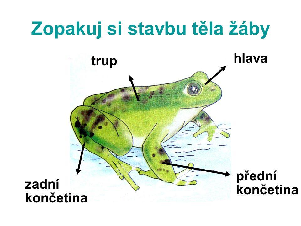 Zopakuj si stavbu těla žáby hlava trup zadní končetina přední končetina
