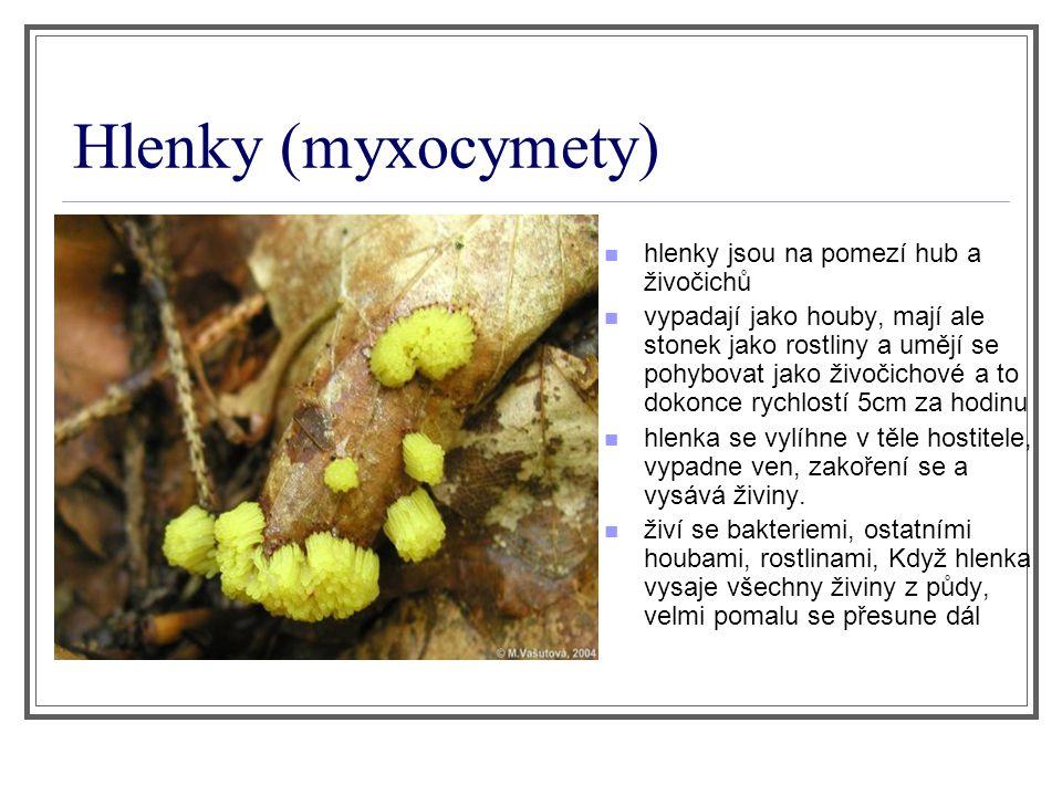 Hlenky (myxocymety) hlenky jsou na pomezí hub a živočichů vypadají jako houby, mají ale stonek jako rostliny a umějí se pohybovat jako živočichové a t