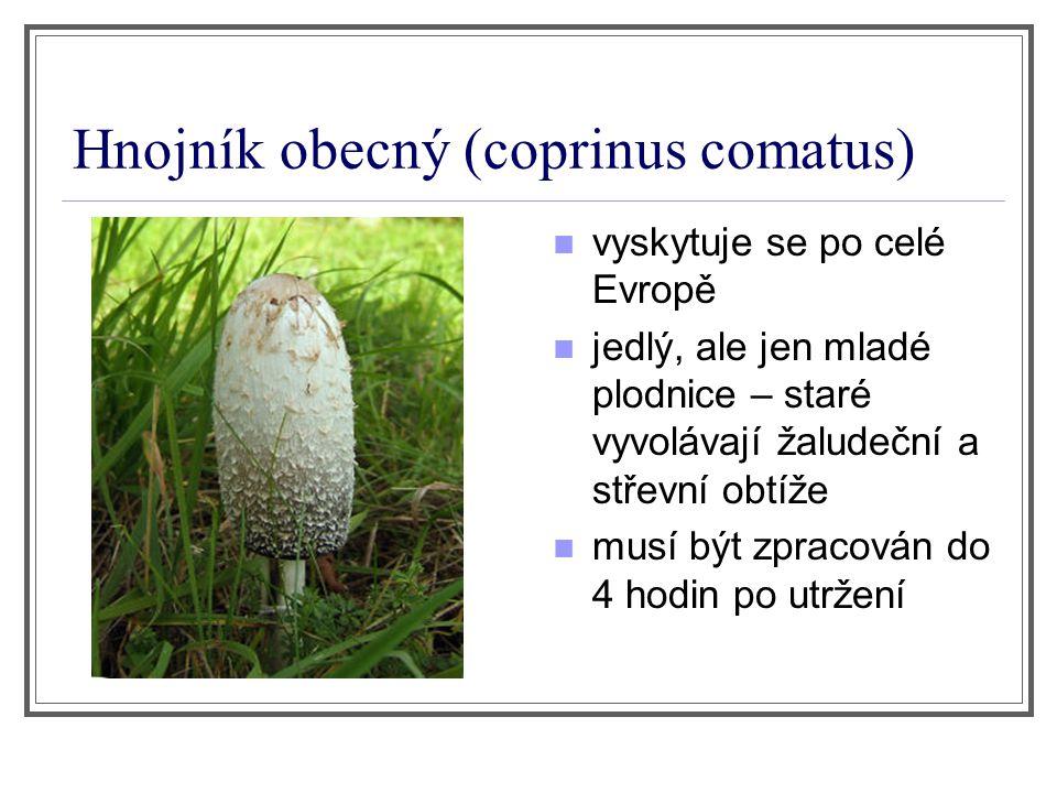 Hnojník obecný (coprinus comatus) vyskytuje se po celé Evropě jedlý, ale jen mladé plodnice – staré vyvolávají žaludeční a střevní obtíže musí být zpr