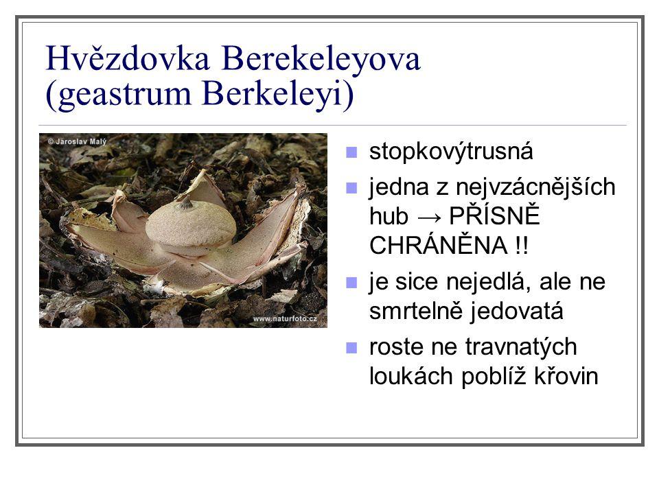Hvězdovka Berekeleyova (geastrum Berkeleyi) stopkovýtrusná jedna z nejvzácnějších hub → PŘÍSNĚ CHRÁNĚNA !! je sice nejedlá, ale ne smrtelně jedovatá r