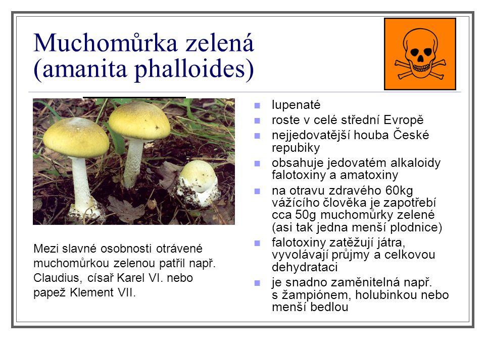Muchomůrka zelená (amanita phalloides) lupenaté roste v celé střední Evropě nejjedovatější houba České repubiky obsahuje jedovatém alkaloidy falotoxin