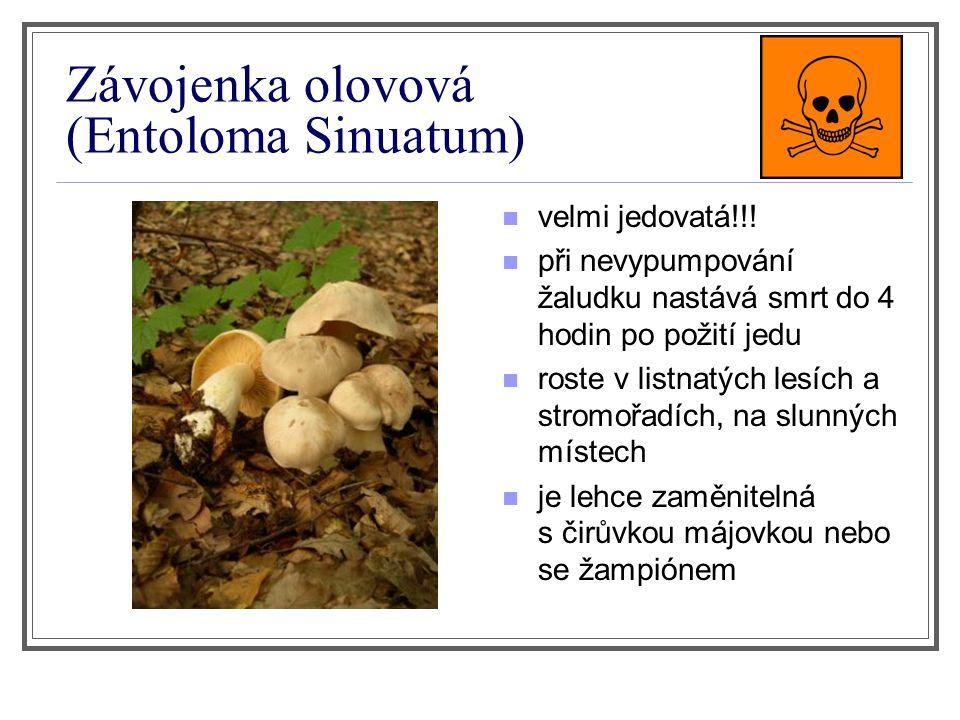 Závojenka olovová (Entoloma Sinuatum) velmi jedovatá!!! při nevypumpování žaludku nastává smrt do 4 hodin po požití jedu roste v listnatých lesích a s