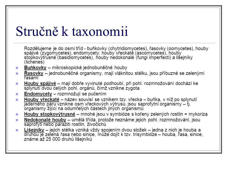 Stručně k taxonomii Rozdělujeme je do osmi tříd - buňkovky (chytridiomycetes), řasovky (oomycetes), houby spájivé (zygomycetes), endomycety, houby vře