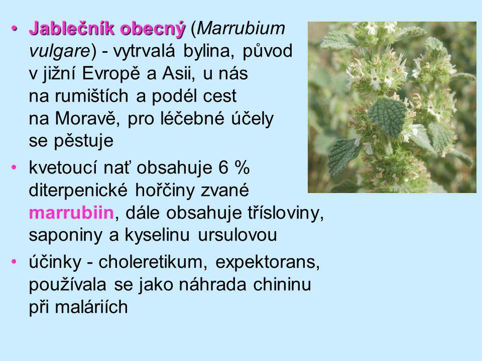 Jablečník obecnýJablečník obecný (Marrubium vulgare) - vytrvalá bylina, původ v jižní Evropě a Asii, u nás na rumištích a podél cest na Moravě, pro lé