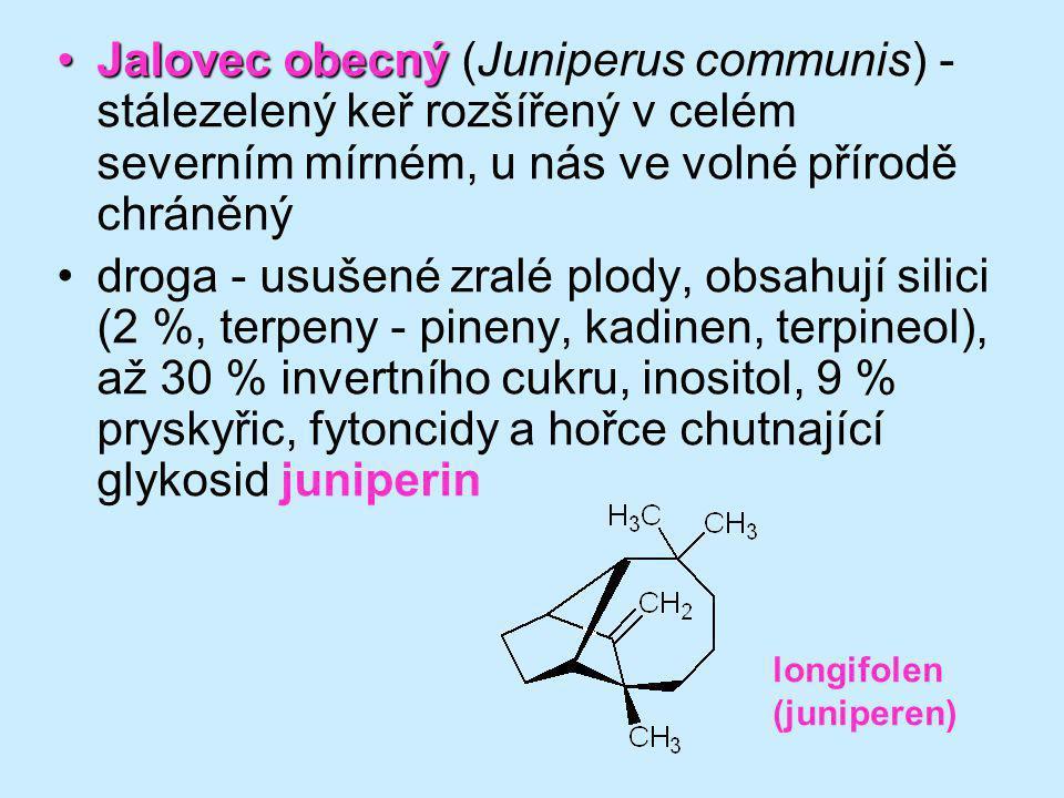 Jalovec obecnýJalovec obecný (Juniperus communis) - stálezelený keř rozšířený v celém severním mírném, u nás ve volné přírodě chráněný droga - usušené