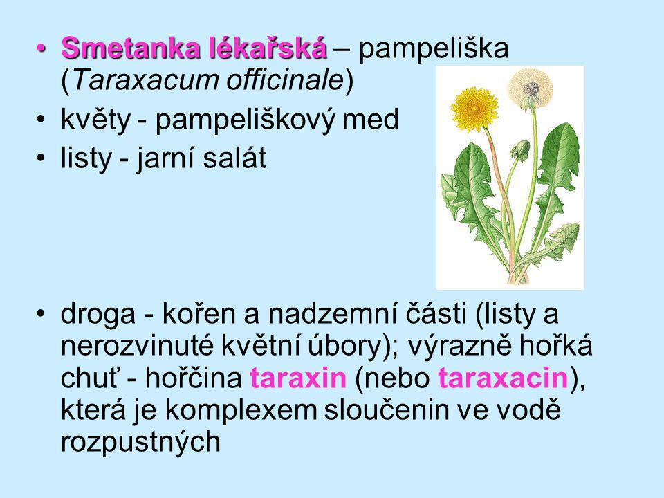 Smetanka lékařskáSmetanka lékařská – pampeliška (Taraxacum officinale) květy - pampeliškový med listy - jarní salát droga - kořen a nadzemní části (li
